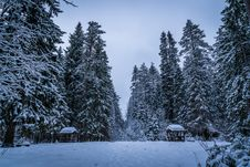 Free Tall Green Trees Filled With Snows During Winter Stock Photos - 109927063