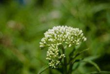 Free White Petaled Flower Stock Images - 109927614