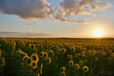 Free Landscape Photography Of Sunflower Field During Sunset Royalty Free Stock Photo - 109927645