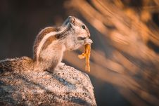 Free Squirrel On Rock Selective Focus Photography Royalty Free Stock Image - 109927786