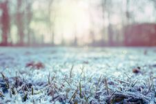 Free Green Grass Covered With Snow Royalty Free Stock Photography - 109927797