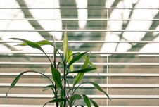 Free Green Leaf Plant Against White Venetian Window Blinds Stock Image - 109927801