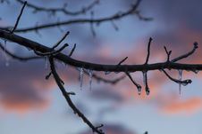 Free Brown Tree Branch With Ice Stock Photos - 109927953