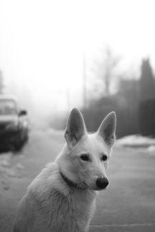 Free White Dog On Road Royalty Free Stock Image - 109927956