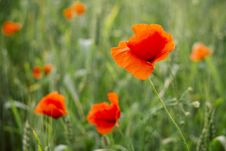 Free Orange Petaled Flowers Stock Photos - 109927973