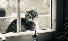 Free Grayscale Photography Of Cat Outside Glass Sliding Window Stock Image - 109928021