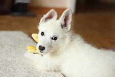 Free Short-coated White Dog On White Textile Stock Images - 109928024