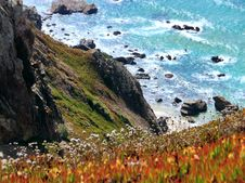 Free Photography Of Orange-and-yellow Petaled Flowers On Cliff Near Body Of Water At Daytime Stock Image - 109928041