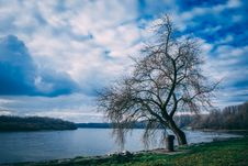 Free Landscape Photography Of Bare Tree Near Body Of Water Under Cloudy Skies Stock Photography - 109928162