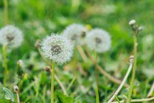 Free Selective Focus Photography Of Dandelion Stock Photos - 109928263
