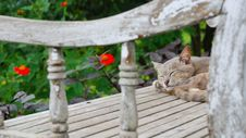 Free Short-fur Gray Cat Sleeping On Gray Wooden Surface Stock Photos - 109928343