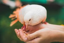 Free Close Up Photograph Of Person Feeding White Pigeon Royalty Free Stock Images - 109928379