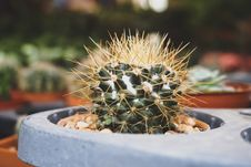 Free Close-up Photography Of Cactus Stock Images - 109928974