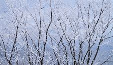 Free Frozen Trees At Winter Season Royalty Free Stock Photo - 109929185