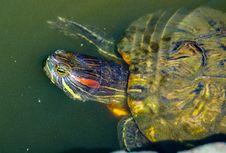 Free Animal, Aquatic, Close Royalty Free Stock Photography - 109929287