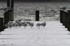 Free Water Bird, Fauna, Snow, Bird Royalty Free Stock Photo - 109932985