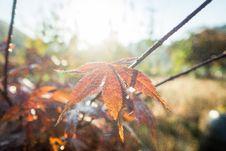 Free Leaf, Autumn, Maple Leaf, Plant Stock Images - 109933014