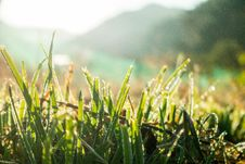 Free Grass, Vegetation, Moisture, Grass Family Stock Photo - 109933110