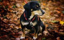 Free Dog, Dog Breed, Dog Like Mammal, Snout Stock Photography - 109933122