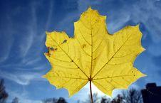 Free Leaf, Maple Leaf, Sky, Autumn Stock Images - 109933244