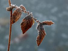 Free Leaf, Macro Photography, Close Up, Twig Stock Photos - 109933253