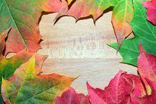 Free Leaf, Maple Leaf, Autumn, Flora Stock Image - 109933261