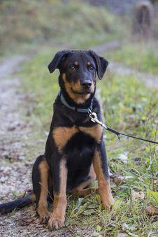 Free Dog, Dog Like Mammal, Dog Breed, Mammal Stock Photo - 109933350
