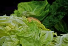Free Vegetable, Leaf Vegetable, Cabbage, Romaine Lettuce Royalty Free Stock Photos - 109933398