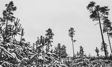 Free Black And White Trees Photography Stock Images - 109973324