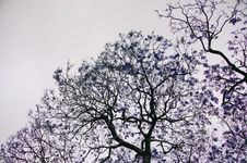 Free Blue Leafed Trees Stock Photos - 109973343