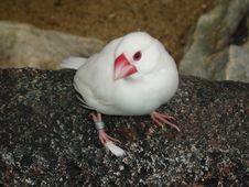 Free White Bird Stock Photography - 110582
