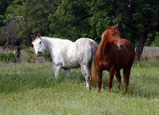 Free Two Horses In Spring Pasture Stock Images - 114444