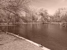 Free Boston S Public Gardens In The Spring Royalty Free Stock Image - 115276