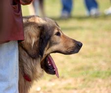 Free Dog Stock Image - 116451