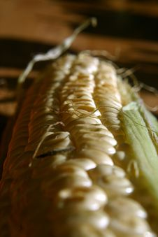 Free Corn Stock Photography - 116882