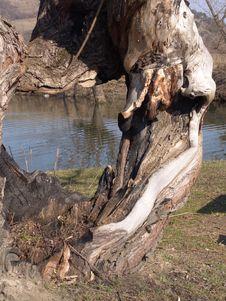 Free Tree Stock Photos - 117063