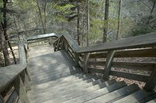 Free Forest Stairs Royalty Free Stock Images - 117329
