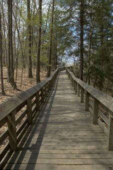 Free Forest Boardwalk Stock Image - 117331