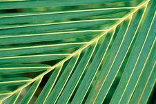Free Leaf Stock Images - 117474