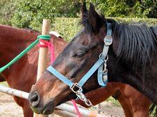 Free Horses Stock Image - 119831