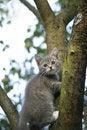 Free Kitten On A Tree Stock Photo - 1105220