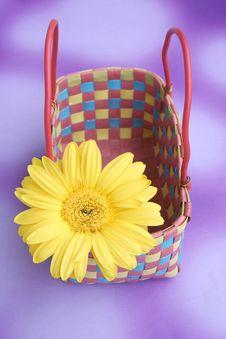 Free Daisy Royalty Free Stock Photo - 1100575