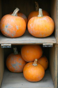 Free Halloween Pumpkins Stock Photos - 1101693
