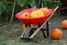Free Halloween Pumpkins Royalty Free Stock Photography - 1101727