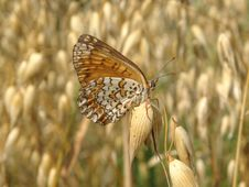 Free Butterfly Royalty Free Stock Photography - 1102207