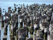 Birds On Pilings Stock Image
