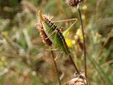 Free Grasshopper Stock Photos - 1102503