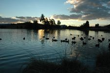 Ducks On Point Hut Pond Royalty Free Stock Photos