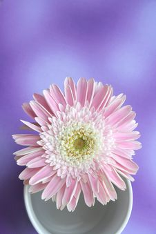 Free Daisy Stock Images - 1103874