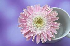 Free Daisy Stock Photos - 1103953